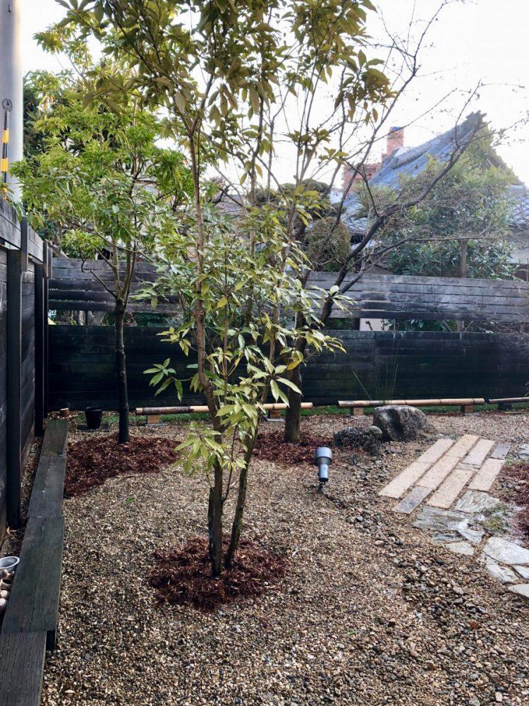 八尾本町の庭|グリーン+ガーデン タマンサリ施工例