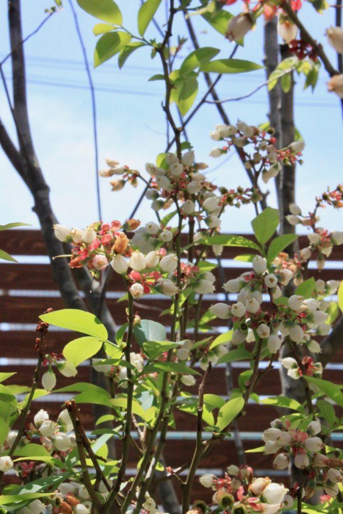 守口の庭|グリーンプラスガーデン タマンサリ施工事例