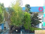 2009秋の植木市