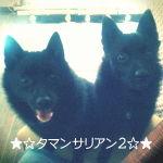 タマンサリアン2blog