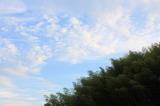 プチうろこ雲?